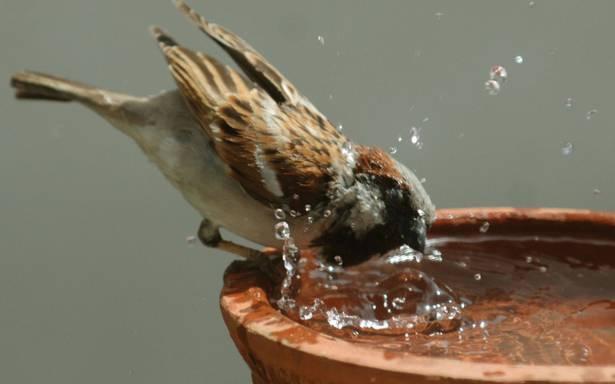 Bird Control & Removal Services